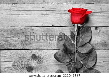 Red rose on black and white wooden background