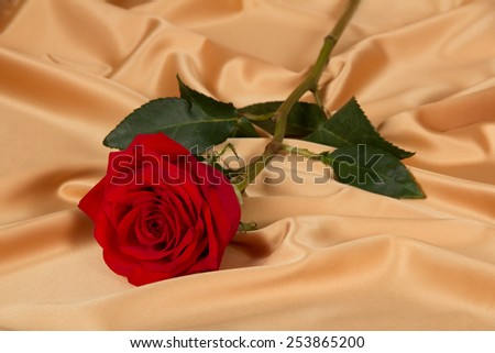 Red rose on golden cloth closeup