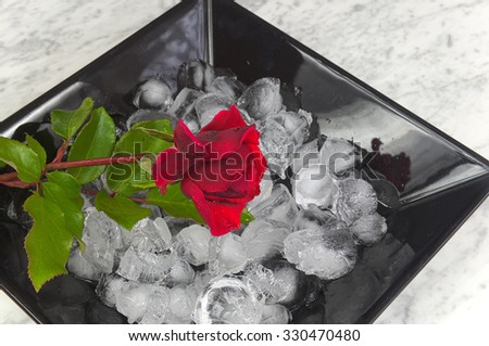 Red rose on ice cubes on a black plate, flowers, birthday, beauty - stock photo