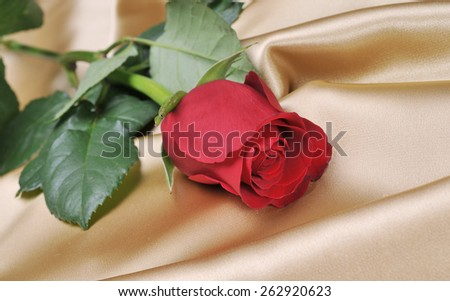 Red rose on satin
