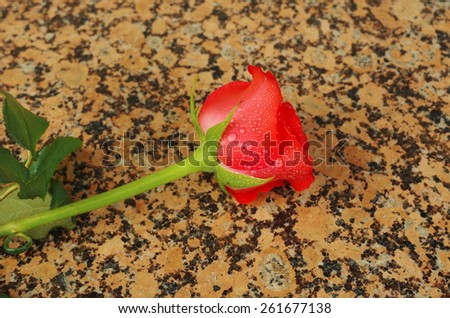 Red rose on the granite