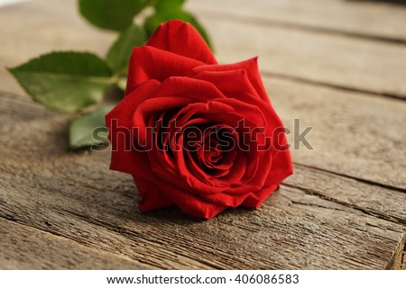 Red rose on the wood background