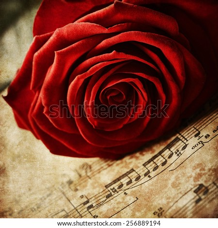 Red rose on vintage music sheets - stock photo