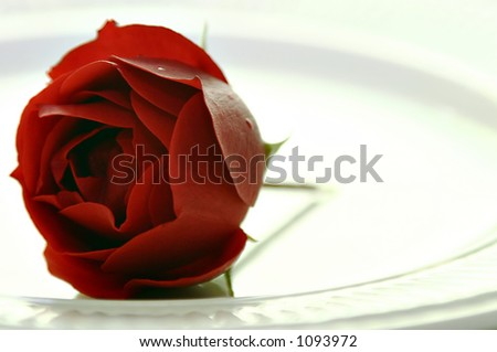 Red rose on white plate