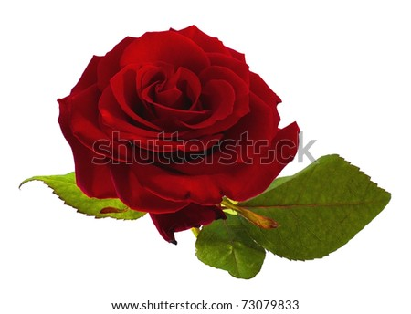Red rose over white background - stock photo
