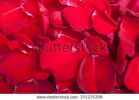 red rose petals - stock photo