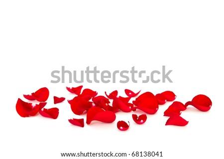 red rose petals - stock photo