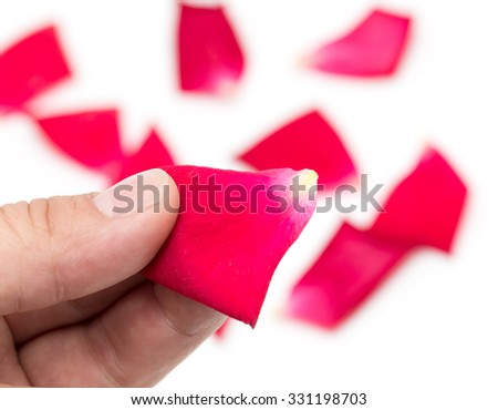 red rose petals in hand on a white background