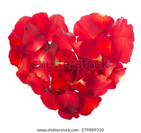 Red rose petals isolated over the white background - stock photo