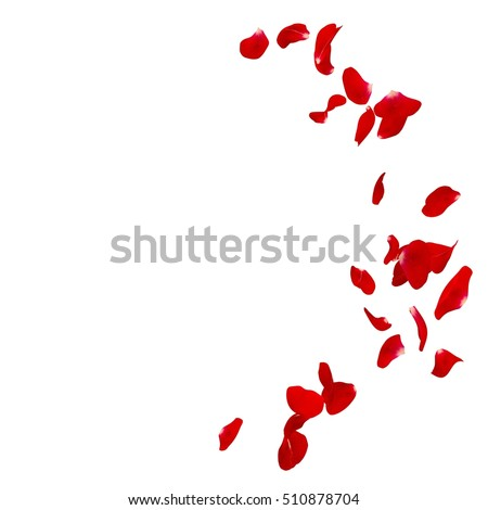 Red rose petals scattered on the floor in a semi-circle. There is a place for Your text or photo