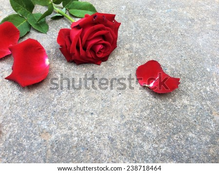 Red rose with cement floor backgrounds