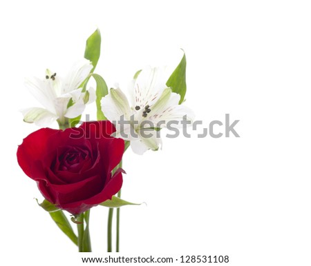 Red Rose with Delicate White Flower - stock photo
