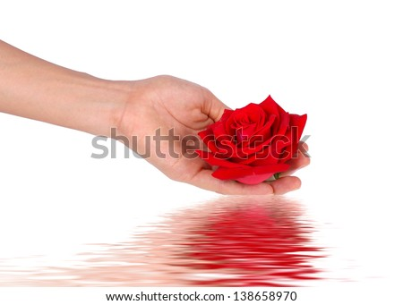 Red rose with hands on white background - stock photo