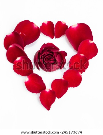 Red rose with petals in heart symbol on white background  - stock photo