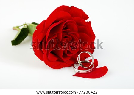 Red rose with two white gold wedding rings on one of the petals