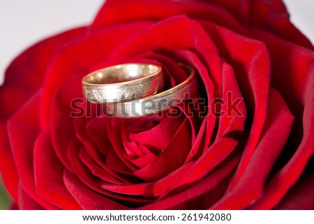 red rose with wedding rings / Love - stock photo
