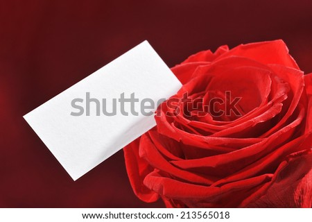 Red rose with white greeting card on red satin background