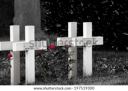Red roses and cross on cemetery world war one - stock photo