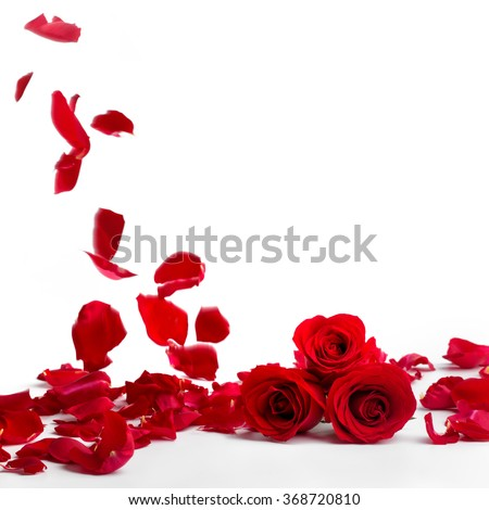 Red roses and rose petals on white background,Valentines day concept. - stock photo
