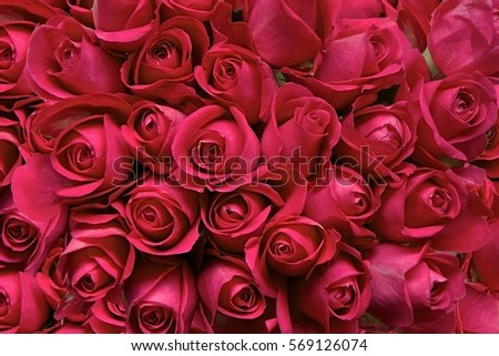 Red Roses as a background