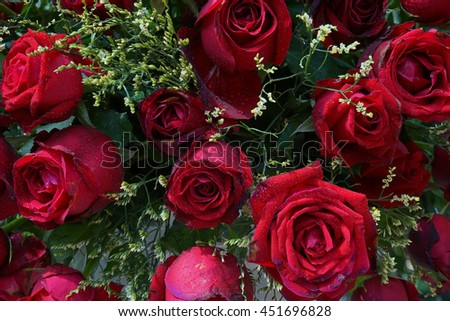 red roses background.