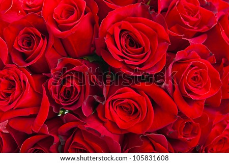 Red roses background - natural texture of love - stock photo