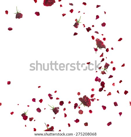 red roses breeze curve with petals, repeatable and isolated on white