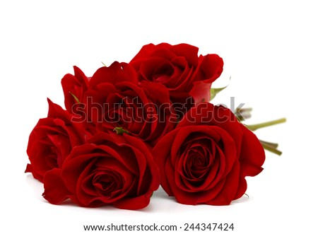 Red roses bunch isolated on white background  - stock photo