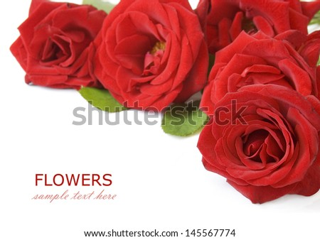 Red roses bunch isolated on white background with sample text - stock photo
