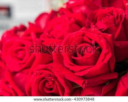 Red roses close-up