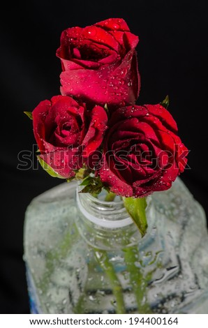 Red roses in plastic bottle isolated on black - stock photo