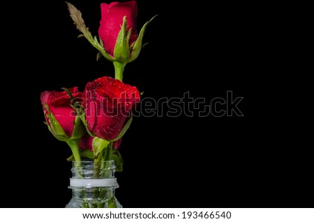 Red roses in plastic bottle isolated on black with text space - stock photo