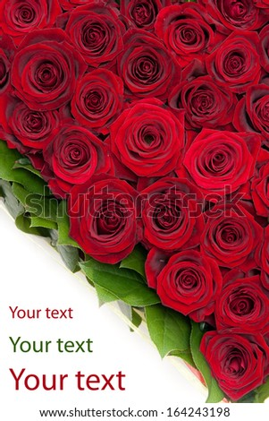 red roses isolated on white - stock photo