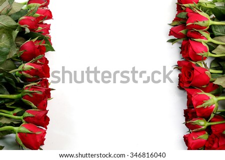 Red roses on a white background. - stock photo