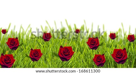 Red roses on green grass - stock photo