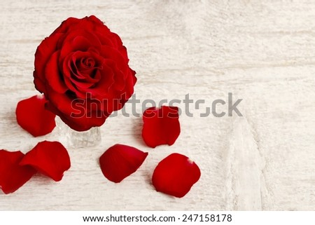 Red roses on white wooden background - stock photo