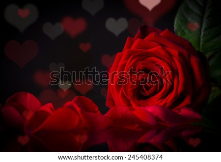Red roses, Valentine's day background - stock photo