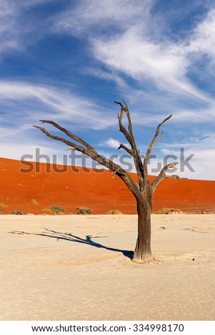 Red sand dune and scorched dead tree shortly after sunrise in Deadvlei, Sossusvlei, Namibia - stock photo