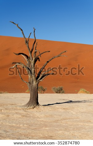 Red sand dunes and scorched dead tree shortly after sunrise in Deadvlei, Sossusvlei, Namibia - stock photo