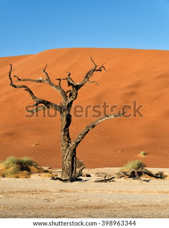 Red sand dunes and scorched dead tree shortly after sunrise in Deadvlei, Sossusvlei, Namibia