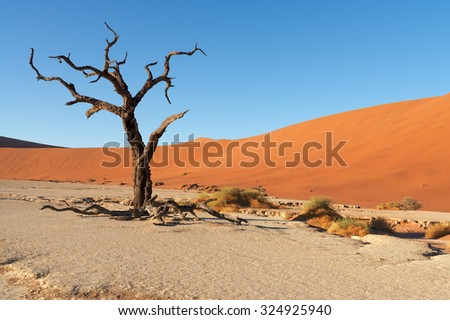 Red sand dunes and scorched dead trees shortly after sunrise in Deadvlei, Sossusvlei, Namibia - stock photo