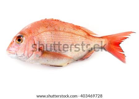 red sea bream - stock photo