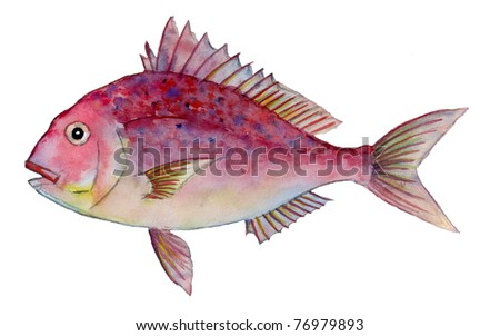 Red Sea Bream - stock photo