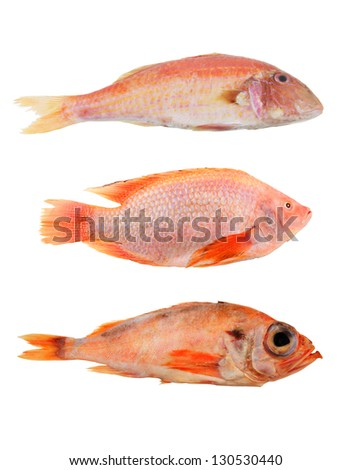 Mullet fish stock images royalty free images vectors for Red mullet fish