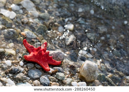 Red Sea star, stone beach, clean water background - stock photo