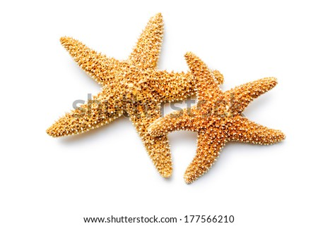 red sea stars isolated on white background - stock photo