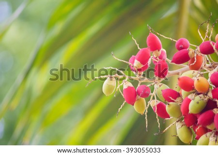 Red Sealing wax palm, Lipstick palm, Raja palm, Maharajah palm, Cyrtostachys renda ornamental plant in gardens:select focus with shallow depth of field:ideal use for background.