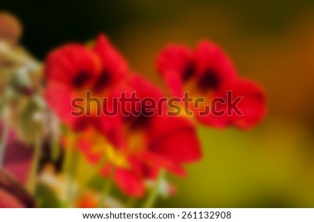 Red seasonal flowers blooming with dark background, blurred, out of focus, artistic, spring, Kolkata, India - stock photo