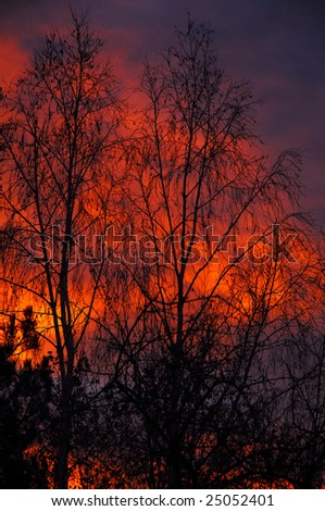 red sky behind the tree at morning