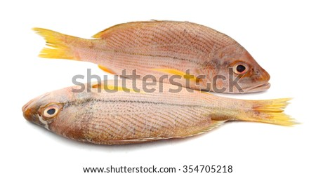 red snapper fish on white background  - stock photo